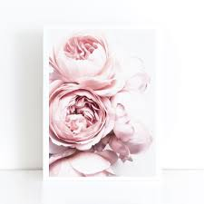 peonies flower blush pink and white peony by joelle scandi flower peonies print