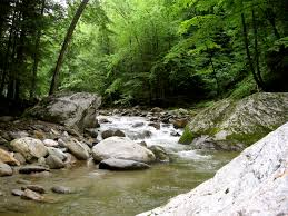 woods wanderer mountain stream