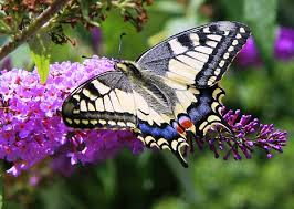 butterfly flowers butterflies and flowers 1 hour nature meditation with soothing