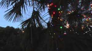 palm tree with christmas lights in canada youtube