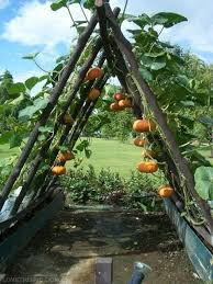 Garden Allotment Ideas Squash Trellis Gardens Pinterest Gardens Allotment Ideas Ipwn