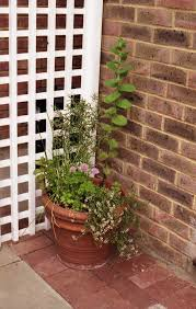 retaining wall growing trends page 2