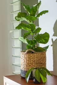Beautiful House Plants by Blog U2014 Www Copperbeech Com Au