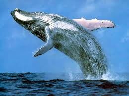 Whaling Meme - bucketlist 盪 whale watching official bucket list
