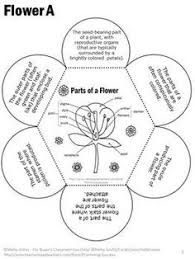 guide plant anatomy quiz at best anatomy learn