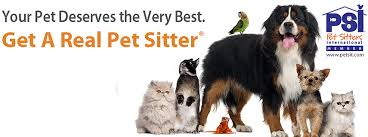 australian shepherd knoxville tn why use a professional pet sitting company in knoxville tennessee