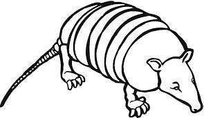 28 armadillo coloring armadillo colouring pages armadillo