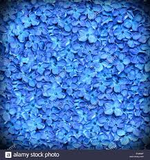 Beautiful Texture Lilac Background Or Beautiful Blue Flower Texture Stock Photo