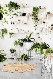 awesome indoor decorative plants 134 best indoor ornamental plants