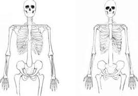 Female Body Anatomy Drawing Male And Female Bodies Drawing Human Figure Joshua Nava Arts