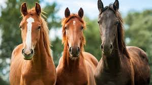 why do republicans want to kill horses frontpage mag