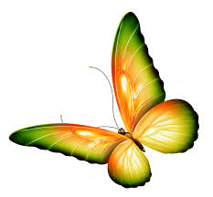 butterfly clipart transparent background pencil and in color