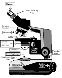 why is a light microscope called a compound microscope proper use of the light microscope kohler illumination