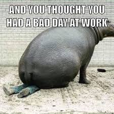 Bad Day At Work Meme - stefan nielsen memes and meems instagram photos and videos