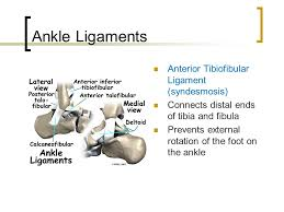 Anterior Distal Tibiofibular Ligament Foot And Ankle Injuries Ppt Video Online Download