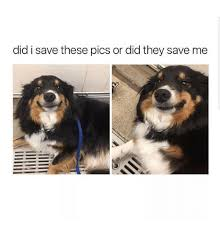 Save Me Meme - did i save these pics or did they save me meme on me me