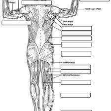 beautiful anatomy and physiology coloring workbook marieb