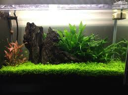 Aquascape Design Layout Planted Tank Contest Aquarium Design Aquascape Awards