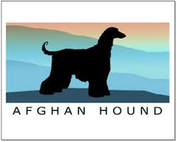 owning an afghan hound all about afghan hounds