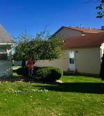 pressure washing tree u0026 shrub trimming rob u0027s outdoor