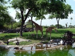 busch gardens theme park guide