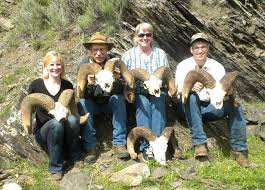 bighorn sheep skull collection goes on display outdoors and