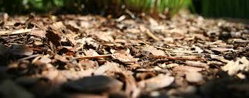 bark mulch vs rock mulch which is better gt landscapes