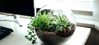 best plant for desk outstanding best plants for office desk space saving desk ideas good