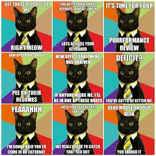 Business Cat Memes - office humor business cat has 9 lives office humor pinterest