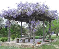 How Much Is A Pergola by 17 Best Images About Pergolas On Pinterest Wisteria Concrete