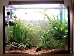aquarium design exle low light low tech non c02 excel based tank the planted tank forum