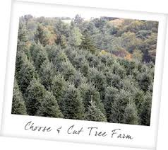 pick your own christmas tree farm nc cranberry nc