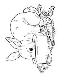 Bunny Rabbit Pictures 552821 Rabbit Colouring Page