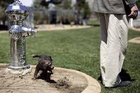 Dog Burial Backyard Salt Lake Valley Gets A Pet Cemetery Deseret News