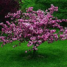lofty inspiration small trees for backyard best 25 ideas on