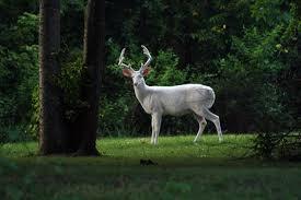 Tennessee wild animals images 77f13ef841e1d1941d34e5ba07f518a4 jpg 720 479 pixels big bucks jpg