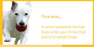 10 tips to make your dog u0027s life happy u0026 healthy pedigree foundation