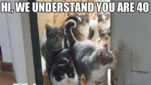 Funniest Cat Memes - funny cat memes the best funny cat memes slapwank