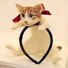 cat headband get custom made headband with your cat s photo at crazycatshop