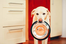 pooch post dog blog nutrapooch fresh dog food