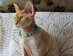 cat jewelry necklace images A short history jewels for cats and inspired by cats the jpg