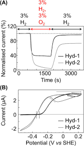 electrochemical insights into the mechanism of nife membrane bound