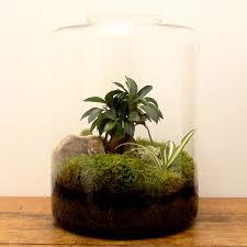 25 best terrariums images on pinterest plants terrarium ideas