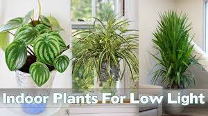 Best Plants For Living Room 25 Indoor Plants For Low Light Youtube