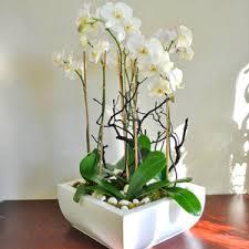 orchid delivery modern orchid garden pb1863 500 00 boca raton fl florist