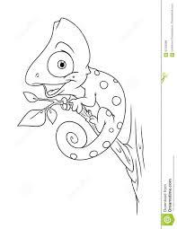 chameleon animal coloring pages bestcameronhighlandsapartment com