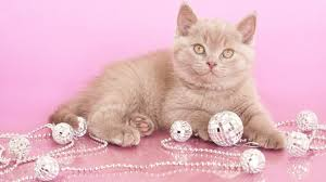 Baby Pink Christmas Decorations Simplywallpapers Com Kitten Ball Lovely Baby Nice Beautiful