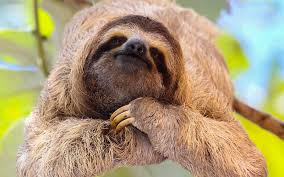 where to hang with sloths on international sloth day travel