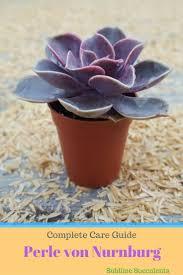13 succulents that are native 39 best sublime succulent care articles images on pinterest
