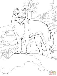 download dingo from australia coloring page animal pictures of